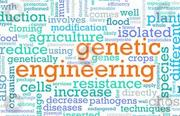 Admission in Genetic Engineering in SRM University Chennai