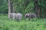 Enjoy with Wildlife Sanctuary and Elephant Ride at Dooars Forest