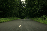 Visit the Greenery of Nature at Chapramari,  a Beautiful Jungle