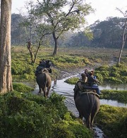 Jaldapara Trip,  the Best Way to Explore the Sanctuary