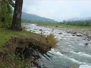 Affordable Rainforest Accommodations of Dooars Trip on this Puja 2013