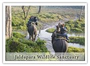 Jaldapara Wildlife Sanctuary Is a Haven for Wildlife Such As