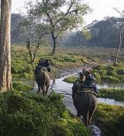 Enjoy North Bengal Jungles Tour on This PUJA 2013