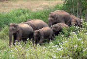 Dooars Jungle Tour Come and Enjoy the Versatility of Nature