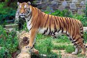 Feel the Biodiversity of Dense Forest at Mahananda Wildlife Sanctuary