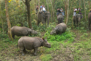 Enjoy Jungle Safari in Dooars