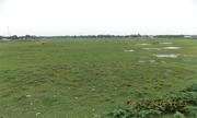 9 Bigha Wonderful Land Sale in Siliguri at Nominal Price