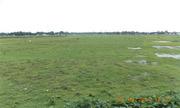 Near Siliguri Town 9 Bighas Land Available For Sale