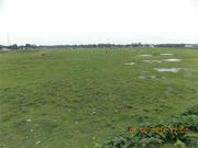 Immediately Sale 20 Bighas Land in Siliguri (Near Matigara)