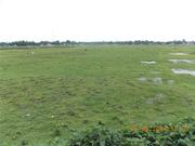 Beautiful Land sale at Siliguri