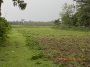3+ Bigha Land Urgently Sale Near Alipurduar