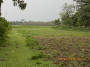 Best Price 3+ Bigha Land Urgently Sale at Alipurduar
