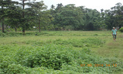 3+ Bigha Useful Land Available for Sale Near Alipurduar