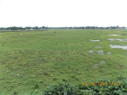Commercial land in Siliguri near Matigara is on sale