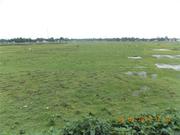 20 Bigha Commercial Land in Siliguri Near Matigara is on Sale