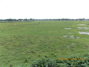 Commercial Plot Near Fulbari on Sale at Best Price