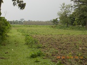 Commercial Land Properties Sell in Alipurduar at Nominal Price