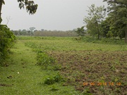 Best Conversion Land Sale at Alipurduar Only 5 Lakhs 50 Thousands