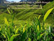 Tea Garden with Nominal Cost at North Bengal For Sale