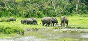 Get an Adventurous Elephant Ride Trip at Jaldapara Wild Life Sanctuary