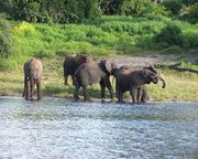 Jaldapara Wildlife Sanctuary Is a Haven for Wildlife
